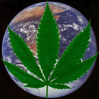 hemp encompasses the globe